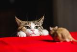 Kot w zasadzce na polowanie na myszy