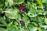 Świeże mieszane sałatki pola zieleni wypiętrzali zbliżenie widok