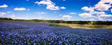 Pole niebieskiej panoramy