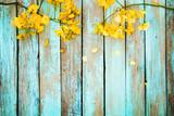 Żółci kwiaty na rocznika drewnianym tle, rabatowy projekt. ton kolor vintage - koncepcja kwiat tło wiosna lub lato