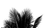 Abstrakcjonistyczny biały i czarny kokosowy liść na białym tle.