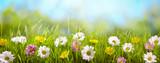 Wiosna kwiat w łące