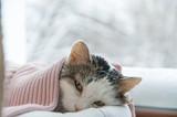 kot leży w oknie w zimie