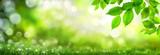 Zielone liście udekorują szerokie tło bokeh wykonane z pasemek w przyrodzie
