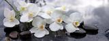 Biała orchidea i czarni kamienie zamykają up.
