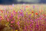 Kwitnące łąki na wiosnę - motyl na łące pełnej pięknych wiosennych kwiatów