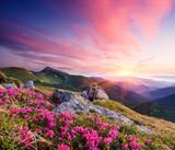 Lato krajobraz z kwiatami w górach