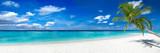 panorama palmy kokosowej super szeroki format na tropikalnej rajskiej plaży marzeń