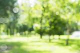 rozmycie naturalne i jasne tło w parku.