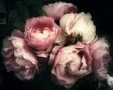 Piękny bukiet różowe róże, kwiaty na ciemnym tle, miękki i romantyczny filtr vintage, patrząc jak stary obraz