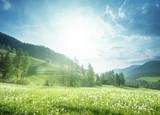 pole wiosna dandelions w dolomitach, Południowy Tyrol, Włochy