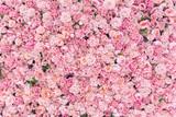 Piękne różowe kwiaty tło