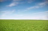 Pole z zieloną banatką i niebieskim niebem