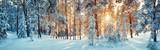 Sosny pokryte śniegiem w mroźny wieczór. Piękna zimowa panorama