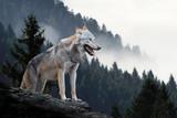 Polowanie na wilki w górach