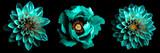 3 surrealistyczne egzotyczne wysokiej jakości turkusowe kwiaty makro na czarnym tle. Obiektów kartkę z życzeniami na rocznicę, ślub, matki i dzień projektowania kobiet