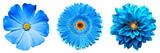 3 surrealistyczne egzotyczne wysokiej jakości niebieskie kwiaty makro na białym tle. Obiektów kartkę z życzeniami na rocznicę, ślub, matki i dzień projektowania kobiet