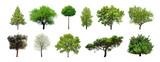 Set zieleni drzewa odizolowywający na białym tle. Różne rodzaje kolekcji drzew