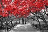 Baldachim czerwoni drzewa w surrealistycznej czarny i biały krajobrazowej scenie w central park, Miasto Nowy Jork