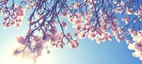 Kwiat magnolii na wiosnę
