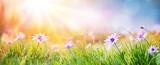 Stokrotki Na Polu - Streszczenie Wiosny Krajobraz