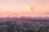 sunrise dziedzinie kwitnienia różowe kwiaty łąki