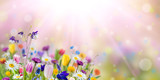 Nature background with wild flowers