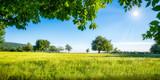 Zielona łąka z owocowymi drzewami w świetle słonecznym