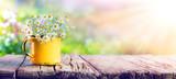 Wiosna - kwiaty rumianku w szklance wody na drewnianym stole w ogrodzie