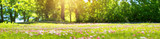 Łąka z dużą ilością białe i różowe kwiaty daisy wiosny w słoneczny dzień