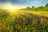 Wiosenne kwiaty na łące.
