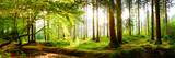 Piękny las na wiosnę z jasnym słońce świeci przez drzewa