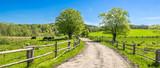Wsi krajobraz, rolny pole i trawa z pastwiskowymi krowami na paśniku w wiejskiej scenerii z wiejską drogą, panoramiczny widok