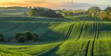 wysokiej rozdzielczości panorama pola wiosną młodych zbóż zielone oświetlone przez pierwsze promienie wschodzącego słońca