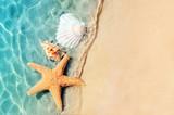 rozgwiazda i muszla na plaży latem w wodzie morskiej.