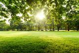 Piękny krajobraz w parku z drzewem i zielonej trawy polem przy rankiem.