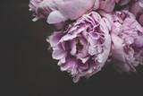 Zbliżenie różowe kwiaty rosnące na czarnym tle