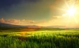wiosenne pola uprawne i wiejska droga; wzgórza toskańskie wsi