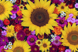 flower greeting card concept. bright summer image.