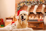 Adorable dog and cat wearing Santa hats together at room decorated for Christmas. Cute pets