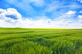 Day natural view at German pastures and cornfields under blue cloudy skies spring time