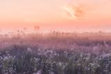 summer sunrise field of blooming pink meadow flowers