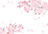 春の花:さくらと散る花びらのフレーム 水彩イラスト