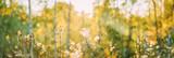 Dry Flowers Of Conyza Sumatrensis. Guernsey Fleabane, Fleabane, Tall Fleabane, Broad-leaved Fleabane, White Horseweed, And Sumatran Fleabane. Close Up Autumn Grass And Flowers In Sunset Sunrise