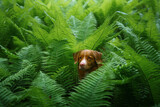 dog in the fern. Nova Scotia Duck Tolling Retriever in the forest. Tropics. Traveling with your pet