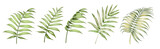 Set of differents palm leaves on white background. Watercolor, line art, outline illustration.